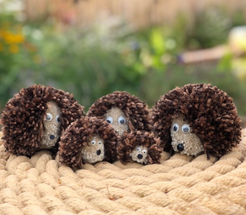 Pom Pom Hedgehog family