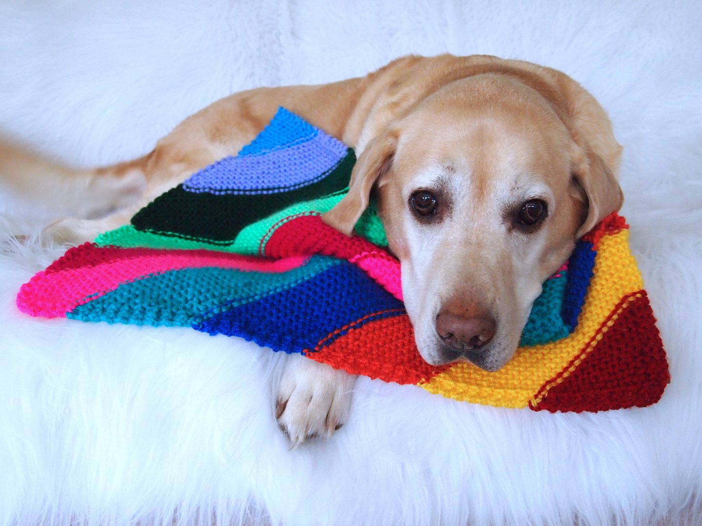 knitted dog blankets