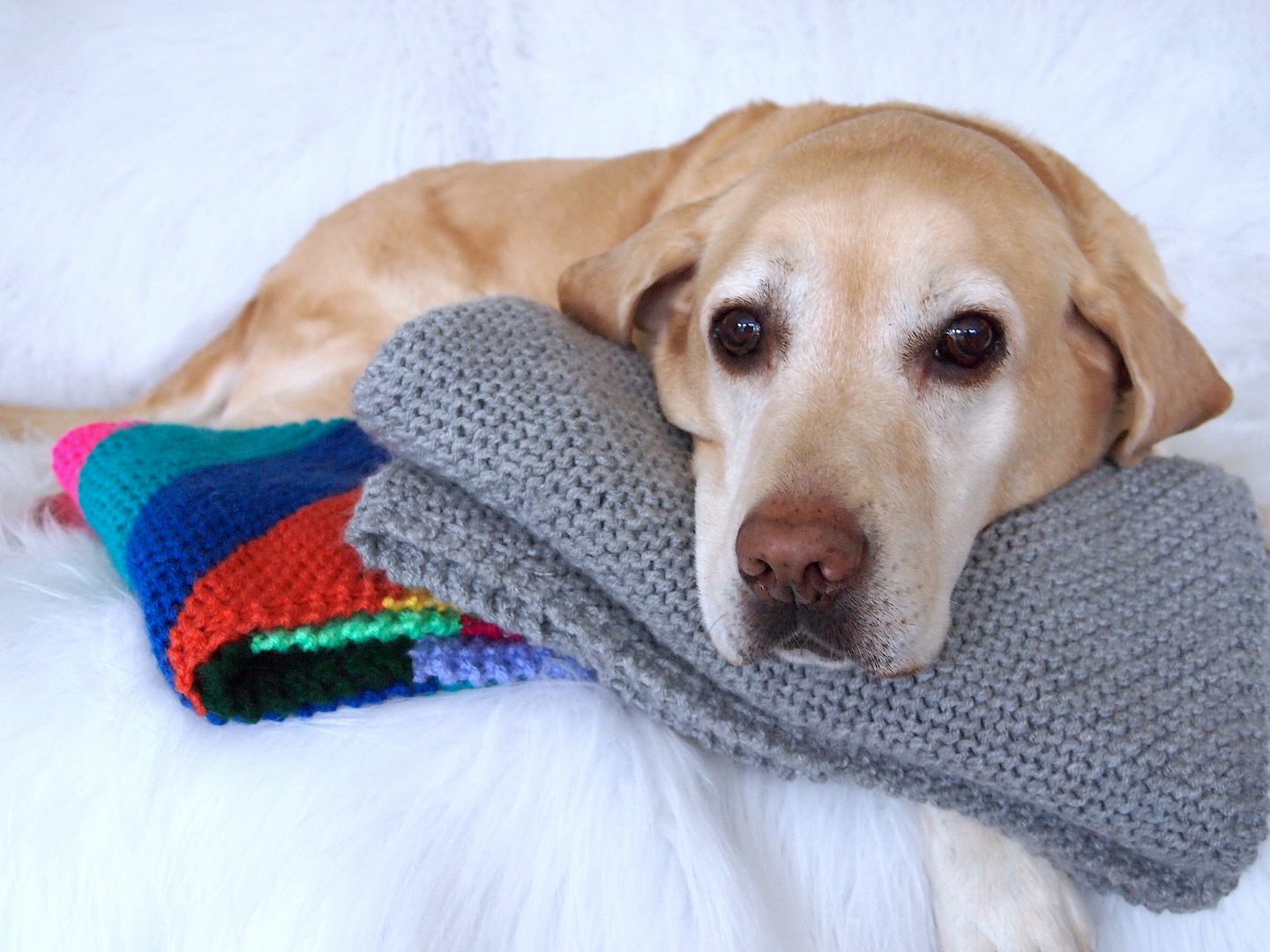 knitted dog blanket